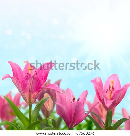 Beautiful meadow with pink lilies in sunny summer day. - stock photo