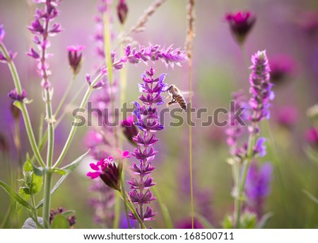 Beautiful meadow with wild flowers - stock photo