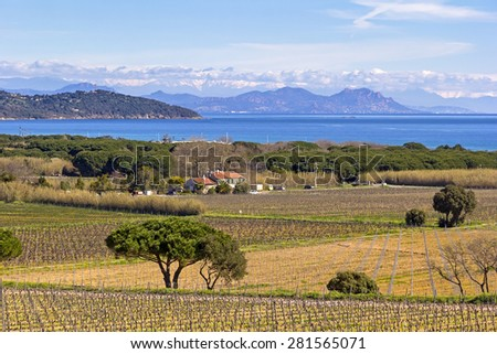 Beautiful Mediterranean Coast, was seen near St. Tropez, South of France, with vineyards in foreground and the Maritime Alps in background. - stock photo