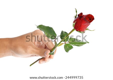 Beautiful men hand holding a red rose isolated on white background - stock photo
