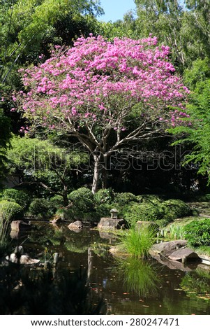 Beautiful Mexican pink flowering Handroanthus impetiginosus tree - stock photo