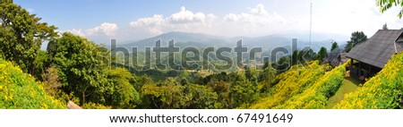 Beautiful Mexican Sunflower Weed field in panoramic view at Doi Huamaekum,Chaingrai Thailand - stock photo