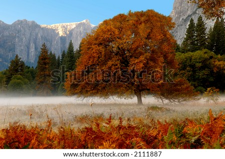 Beautiful Mist in early morning , yosemite valley - stock photo
