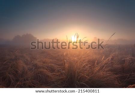 Beautiful misty sunrise landscape.  - stock photo