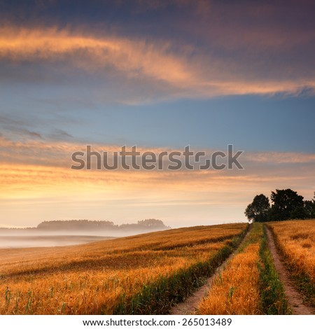 Beautiful Misty Sunrise Landscape Field in North Poland/ Morning Glory With Dirt Road - stock photo