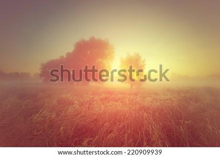 Beautiful misty sunrise landscape. Foggy morning rmeadow, - stock photo