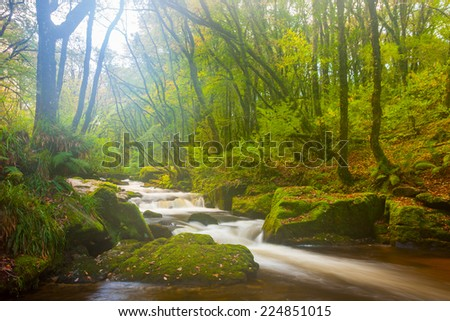 Beautiful misty woodland scene at Golitha Falls Nature Reserve on the River Fowey Cornwall England UK Europe - stock photo