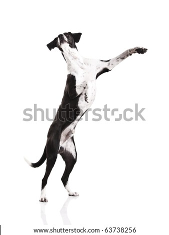Beautiful mixed breed dog, standing over white background - stock photo