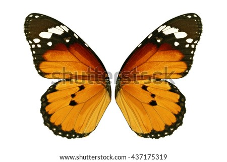 Beautiful monarch butterfly wings isolated on white background. - stock photo