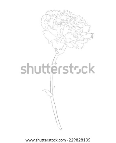 beautiful monochrome black and white carnation flower isolated on white background. Hand-drawn contour lines and strokes. additional format in the profile of the artist - stock photo