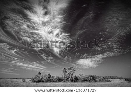 Beautiful monochrome image of a cirrus cloud formation over the Florida Everglades. the black and white interpretation brings out the structure of the cloud formation. - stock photo
