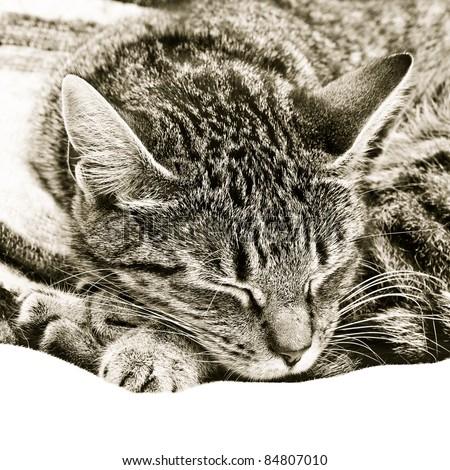 Beautiful monochrome image of a sleeping tabby cat - stock photo