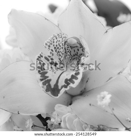 Beautiful Monochrome Lily Isolated on White Background - stock photo