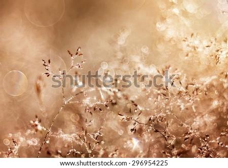 Beautiful morning dew - stock photo