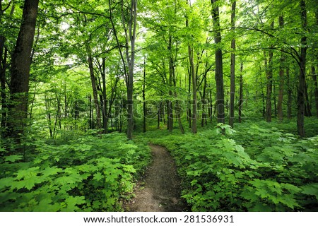 Beautiful morning green forest - stock photo