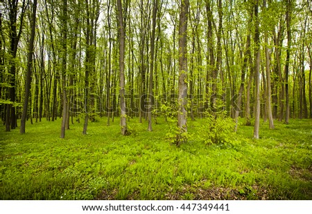 Beautiful morning in forest in spring with many trees and green grass and flowers - stock photo