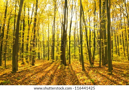 Beautiful morning in the misty autumn forest with sun rays - stock photo