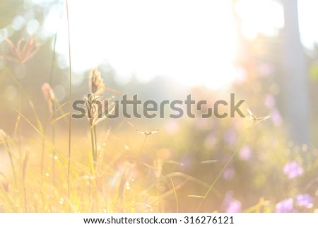 Beautiful morning landscape - grass and sunlight as nature background - stock photo