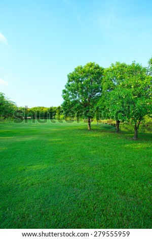 beautiful morning light in public park with green grass field and green fresh tree plant perspective to copy space for multipurpose vertical form - stock photo