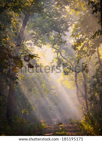 Beautiful morning light in the sal forest in Bardia National Park, Nepal - stock photo