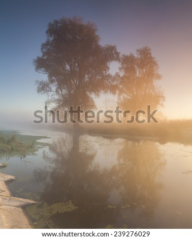 Beautiful morning mist landscape near a small river.