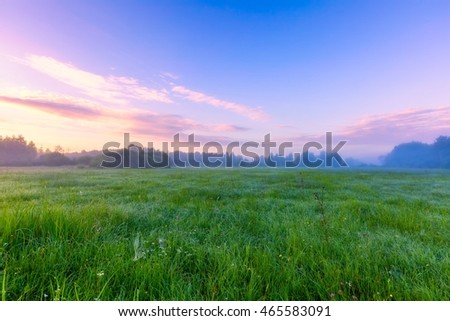 Beautiful morning on foggy meadow. Mysterious and hazy meadow landscape photographed in Poland.