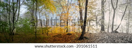 Beautiful morning scene in the forest, wood panorama changing seasons, spring, summer, autumn, winter, winter Is Coming - stock photo