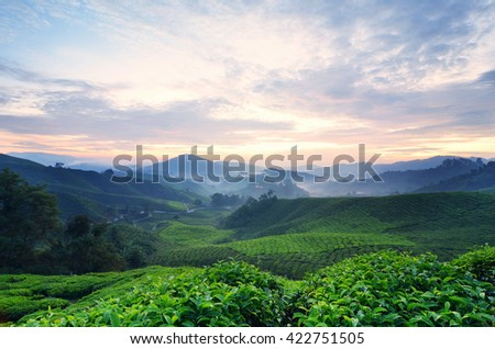 Beautiful morning scenery of Cameron Highland Tea Plantation,, Malaysia with red and yellow sky light. - stock photo