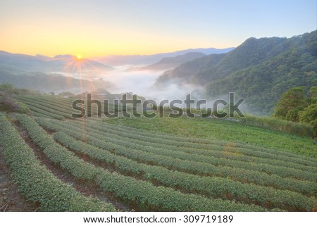 Beautiful morning scenery of tea gardens at sunrise with the golden sun rising from horizon and ethereal fog in the distant valley, in Ping-ling, a rural village near Taipei, Taiwan - stock photo