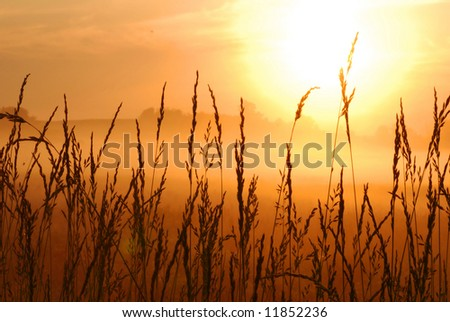 beautiful morning sunrise with wheat grass in the foreground - stock photo