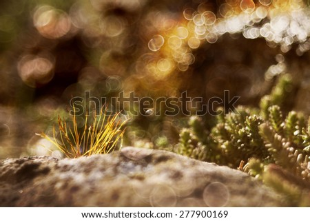 Beautiful mossy stones close up with light bubbles in the background   - stock photo