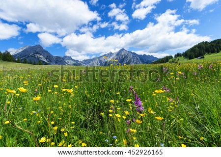 Beautiful mountain landscape in the Alps with wild flowers and green meadows. Walderalm, Austria, Tyrol.