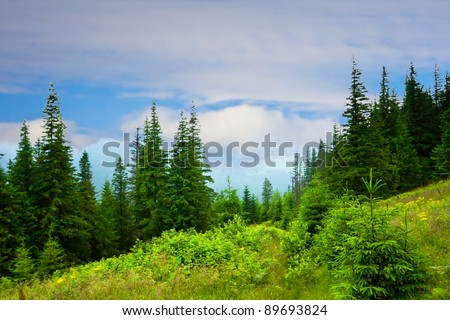Beautiful mountains landscape in Carpathian - stock photo
