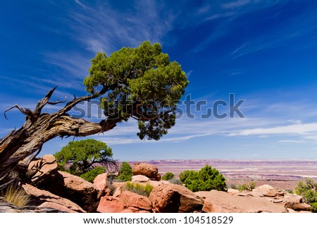 Beautiful mountains, tree and desert landscape with tree and clouds. National park in USA - stock photo