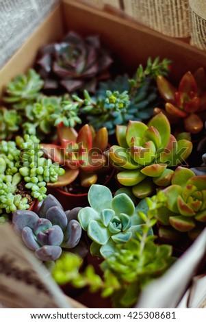 Beautiful multi-colored cactus succulents in a planter - stock photo