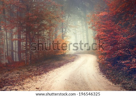 Beautiful mysterious red and orange color season forest with road. Color filter effect used. - stock photo
