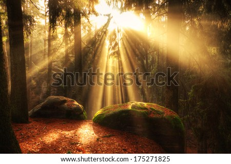 beautiful mystical forest and sunbeams, Czech Paradise - stock photo
