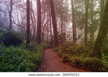 Beautiful mystical forest / park / garden with path, spooky trees, mossy stones and lantern, during foggy day. - stock photo