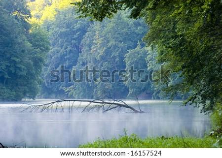 Beautiful nature - stock photo