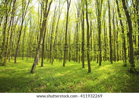 Beautiful nature at morning in the misty spring forest with sun rays - stock photo