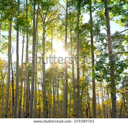 Beautiful nature at morning in the spring forest - stock photo