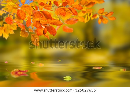 Beautiful nature autumn background with branch reflection in water - stock photo
