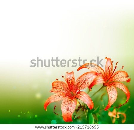 beautiful nature background with red lilies - stock photo