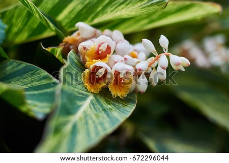 Beautiful nature blossom chinese tree white stock photo 100 legal beautiful nature blossom chinese tree with white yellow red flowers and big green leaves with mightylinksfo