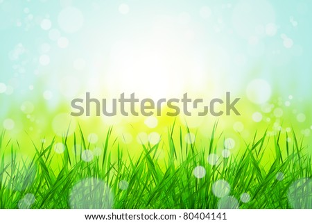 beautiful nature bokeh with grass background