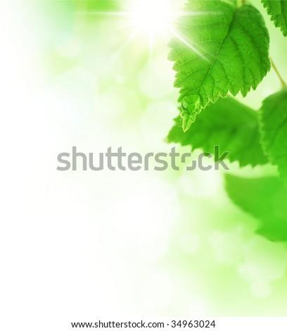 Beautiful Nature Border - stock photo