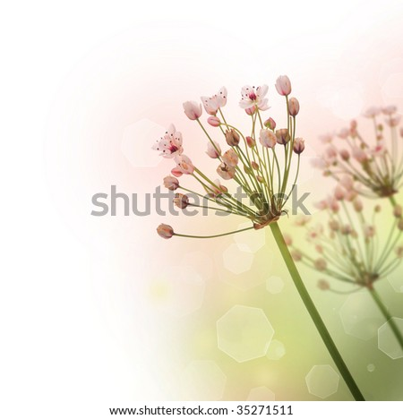 Beautiful Nature Border - stock photo