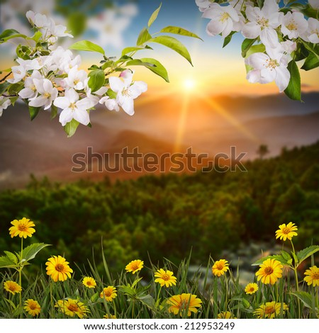 Beautiful nature composition with apple blossom and yellow daisies in a grass - stock photo