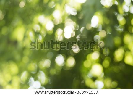Beautiful nature green background - stock photo