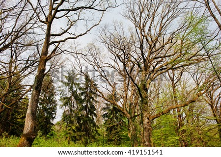 Beautiful nature  in the misty spring forest with sun rays - stock photo